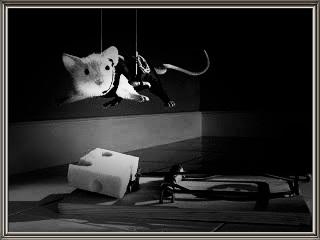 ed io conosco il topo...