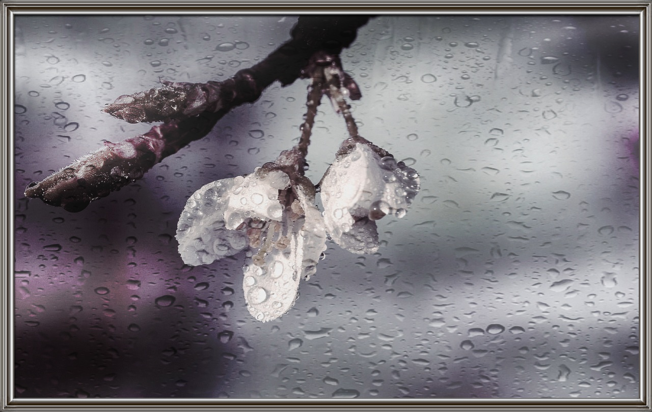 le gocce di pioggia...